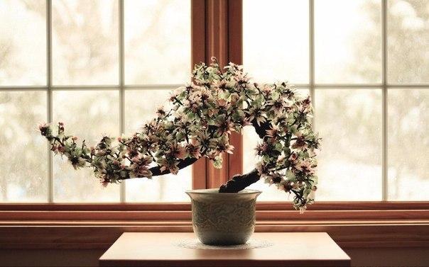 Пять основных ошибок при пересадке покупных цветов