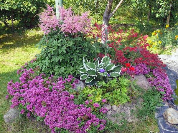 Десять лучших многолетников в вашем саду