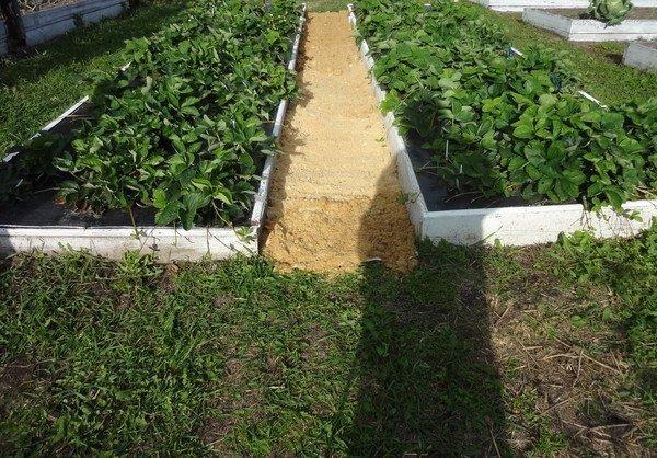 Как сделать так, чтобы трава между грядками не росла