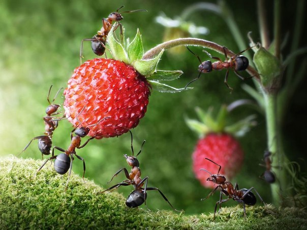 Способы борьбы с муравьями в саду