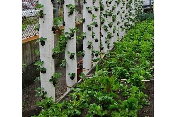 Вертикальные грядки: увеличиваем огород. 14365.jpeg