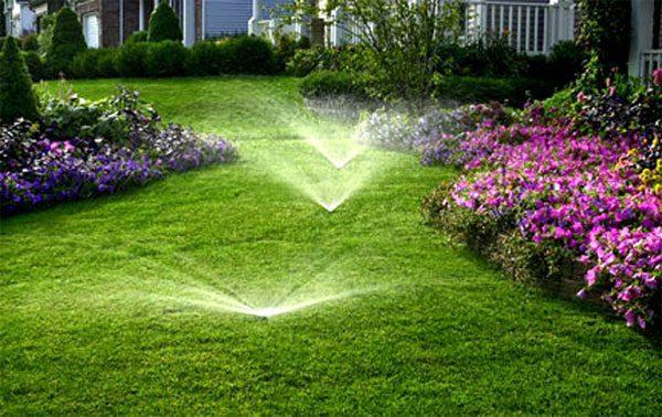 Как правильно удобрять свой газон. 14603.jpeg