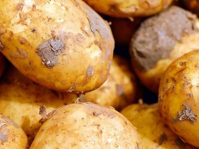 Выбирайте: 5 методов посадки картофеля. 14624.jpeg