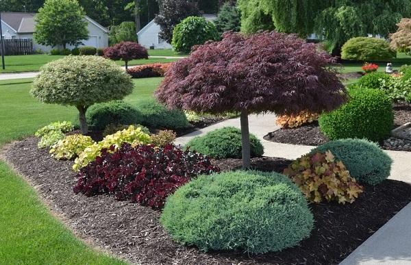 Гейхеры - трава, которая сделает ваш сад изящным. 13812.jpeg