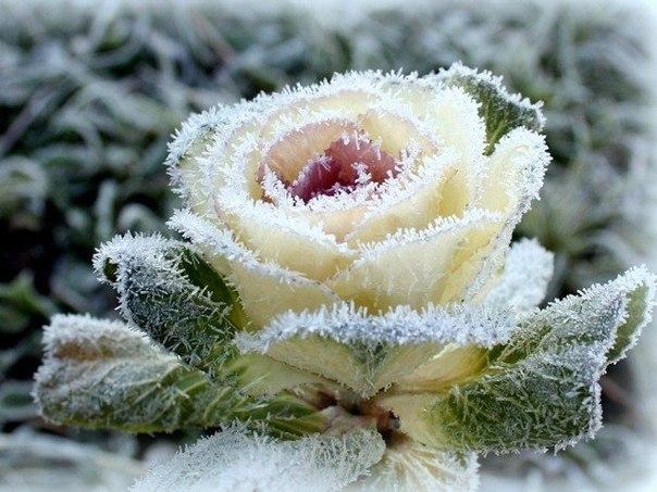 Зимний