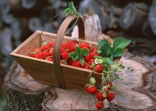 Растим землянику дома круглый год