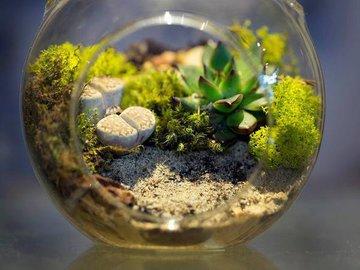 Террариум для комнатных растений своими руками