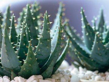 Шесть лучших растений для ленивых садоводов