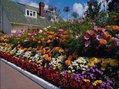 О пользе планирования клумбы: ошибки садоводов