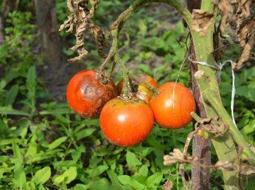 Предотвращаем болезни растений