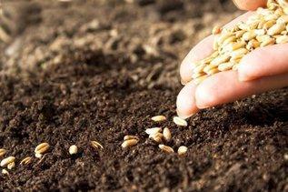 Весна идет: секреты посева семян в открытый грунт