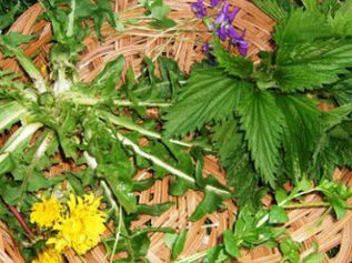 Апробировано: рецепт подкормки из сорняков