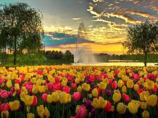 Тюльпаны хотят особенную подкормку