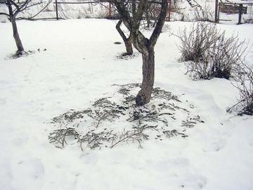 Зима - время борьбы с сорняками в саду
