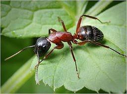Топ-14 способов избавления от муравьев на даче