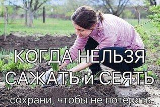 Когда нельзя сажать и сеять