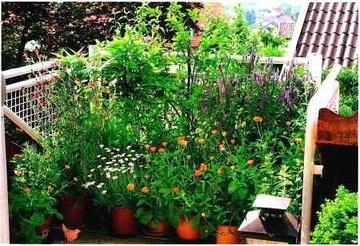 Для лентяев: выбираем самые неприхотливые садовые растения