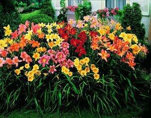 18 советов о выращивании цветочной рассады