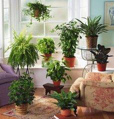 Пять комнатных растений, которые должны быть в каждом доме