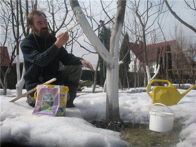 Срочно: что надо сделать в саду в марте