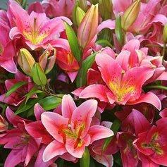 Причины уменьшения в размере цветков лилии
