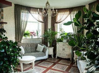 Выбираем растение солитер для комнаты