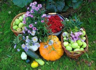 Полезные советы для огорода и сада