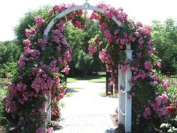 Делаем сами: садовая арка с плетистыми розами