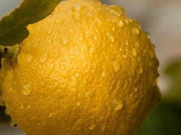 Какие лимоны не надо сажать на подоконнике