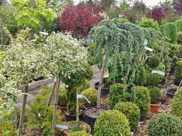 Семь шагов: как сажать дерево или кустарник?