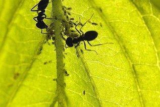 Как избавиться от муравьев на садовом участке