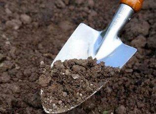 У вас на участке кислая почва? Не отчаиваетесь!