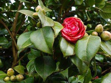 Топ-5 цветущих кустарников для тени и кислых почв