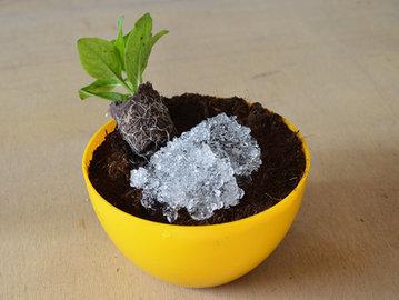 Как напоить растение, пока мы в отпуске? Берем гель из подгузника