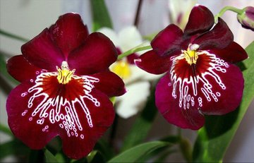 Пять полезных советов по выращиванию орхидеи
