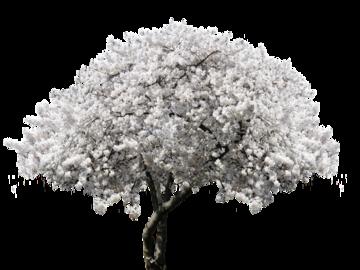 Капризная вишня: как создать вишневый сад