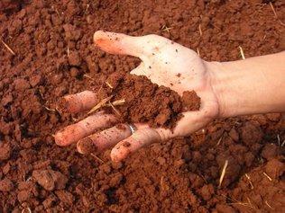 Как узнать тип почвы и зачем это нужно