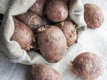 """Без """"химии"""" не обойтись: чем обработать картофель перед посадкой"""