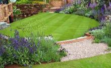 Выбираем правильную газонную траву