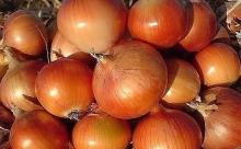 Почему лук и морковь должны расти рядом
