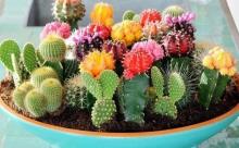 Чтобы кактусам нравилось у вас дома