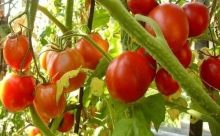 Вижу цель: как правильно выбрать сорт овощей