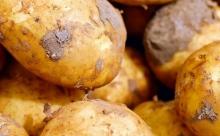 Выбирайте: пять методов посадки картофеля